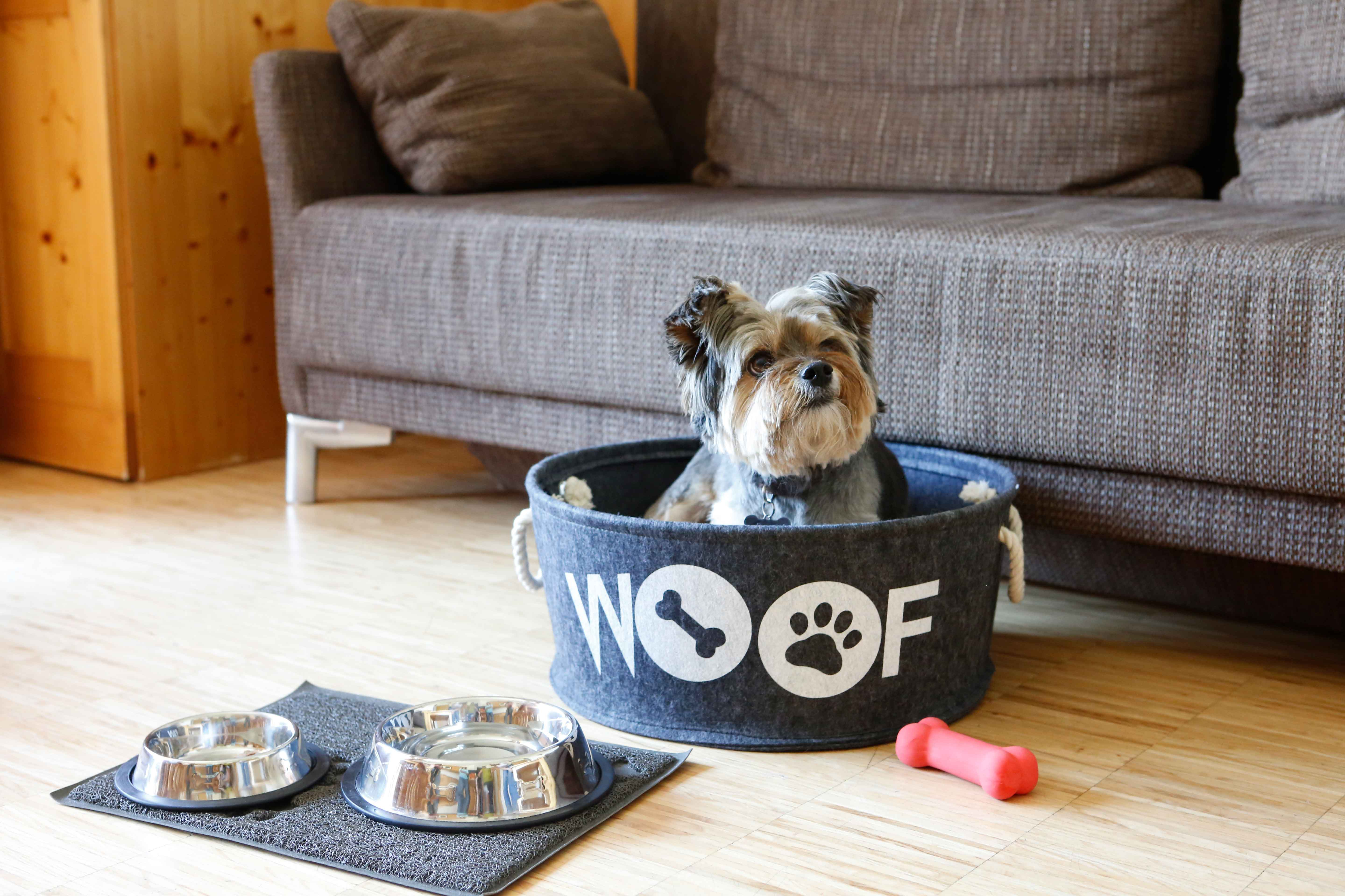 Yay! Off to the family holiday with the dog - Kinderhotel Ramsi