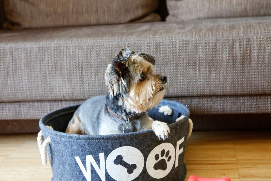 Juhu! Ab in den Familienurlaub mit Hund