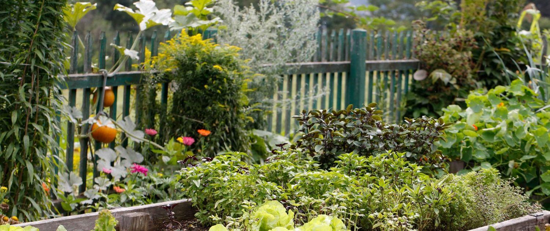 Kinderhotel Ramsi Cuisine Herb garden
