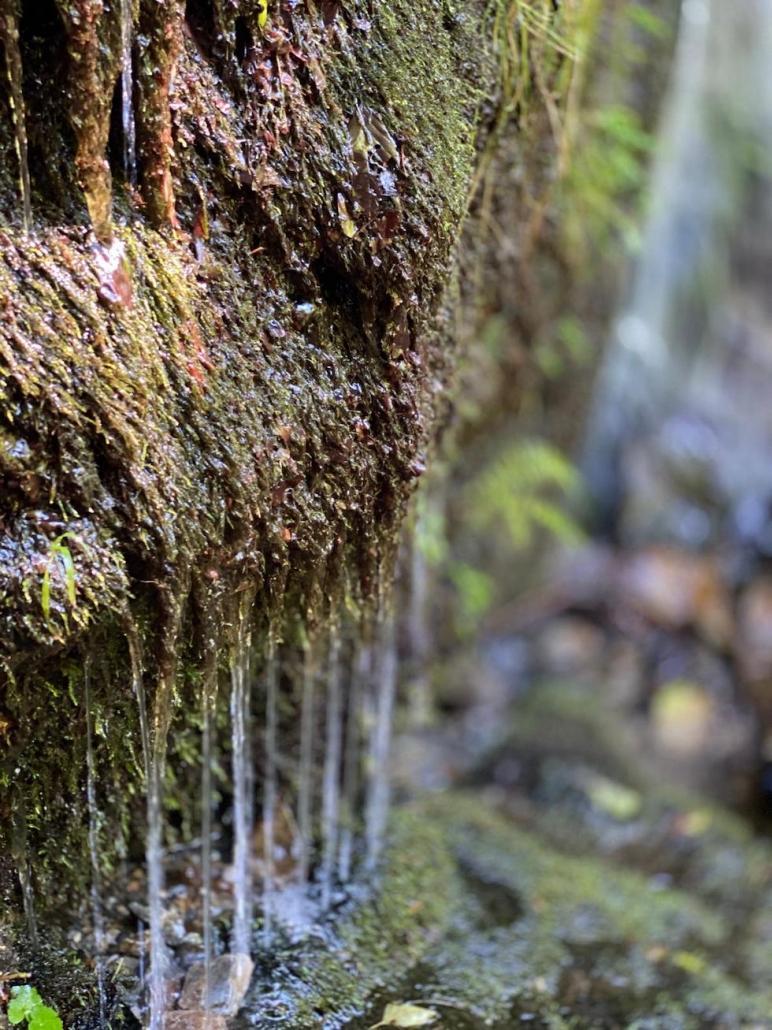 Wasserwandern im Gösseringgraben Kinderhotel-Ramsi
